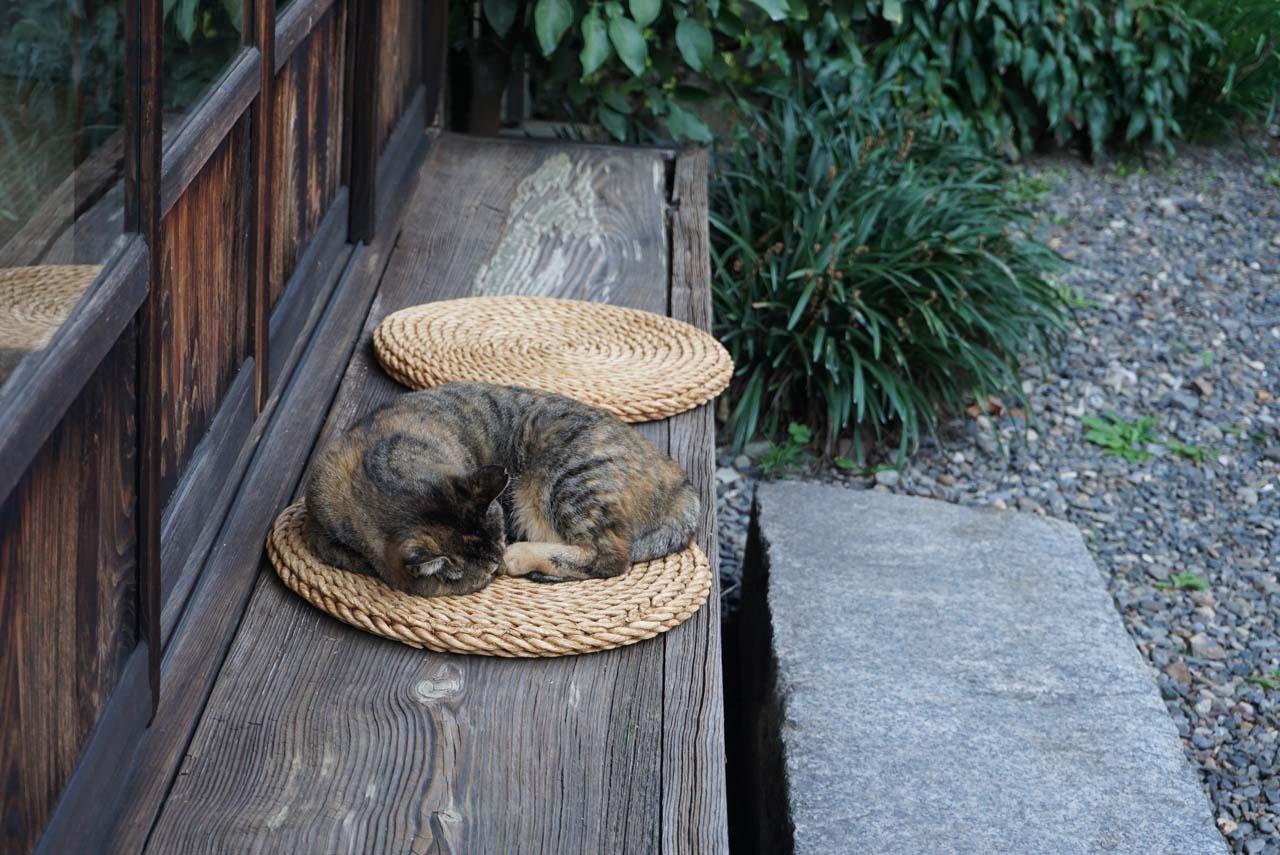 河井寛次郎記念館 猫