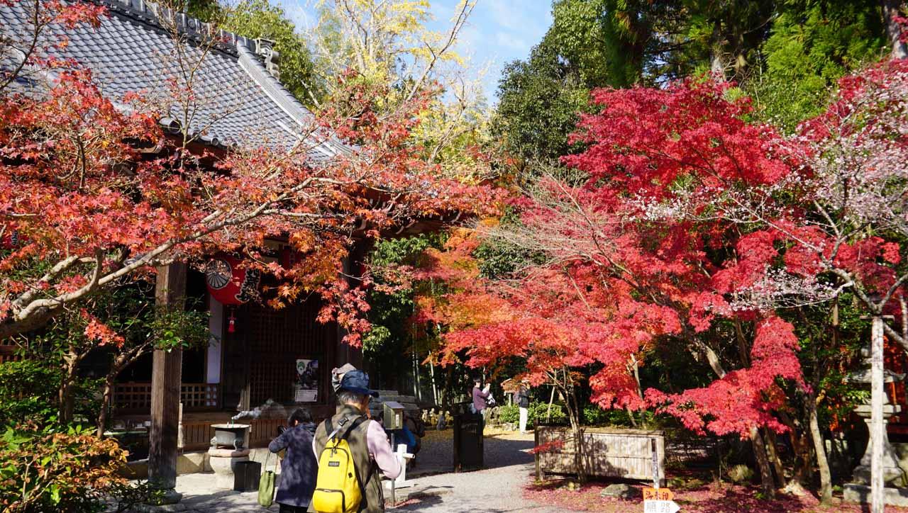 赤山禅院 紅葉
