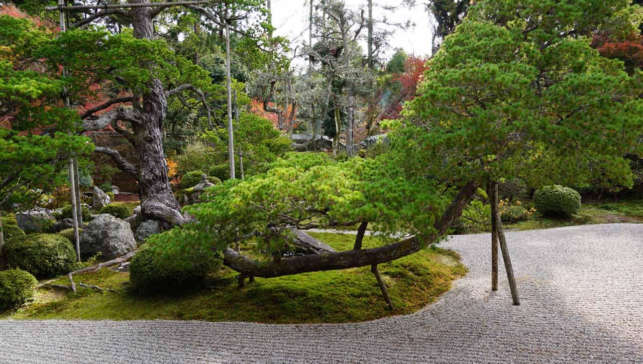 曼殊院 庭園