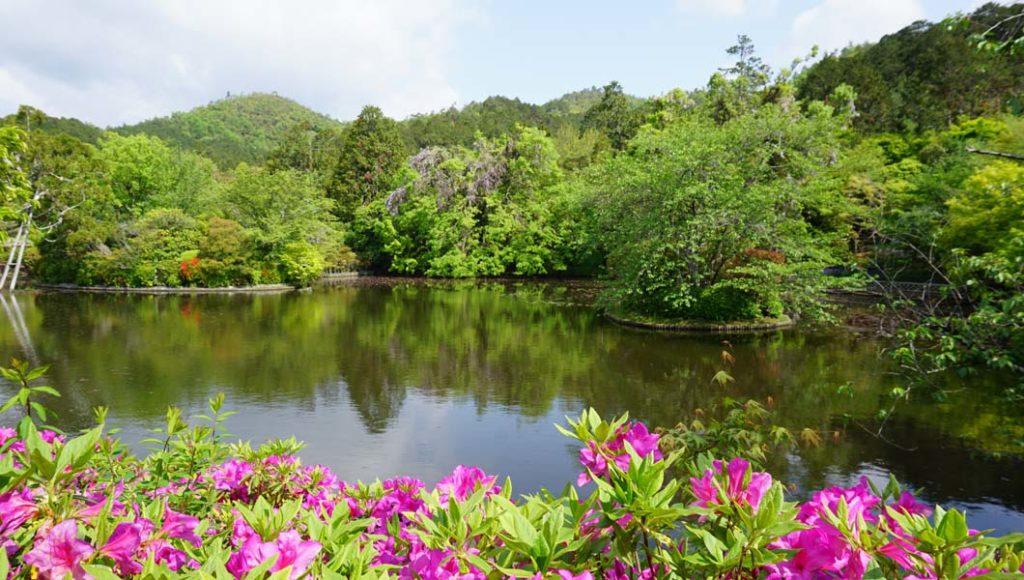 龍安寺 庭園