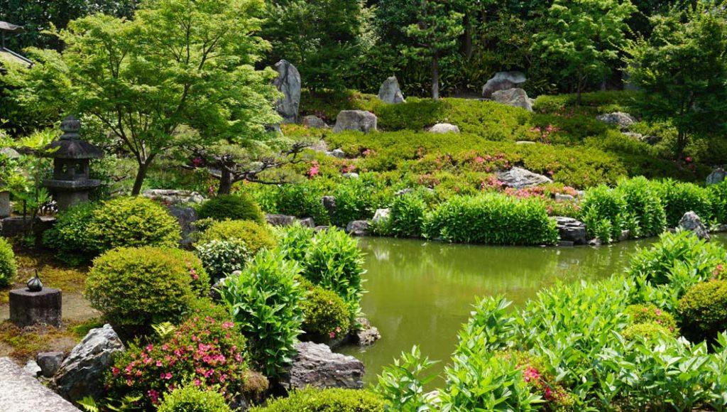両足院 半夏生の庭