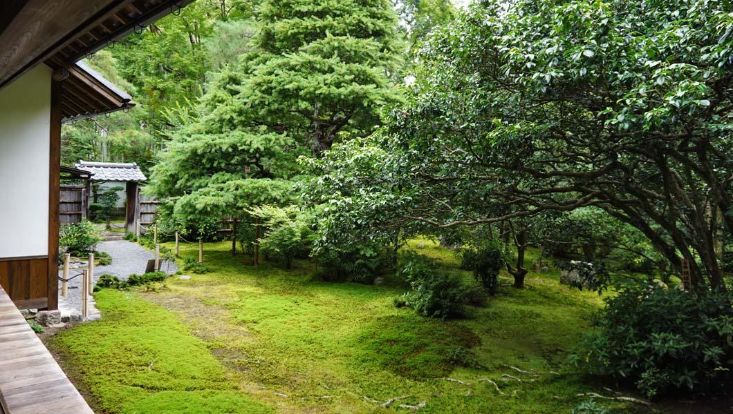 地蔵院 方丈前の庭