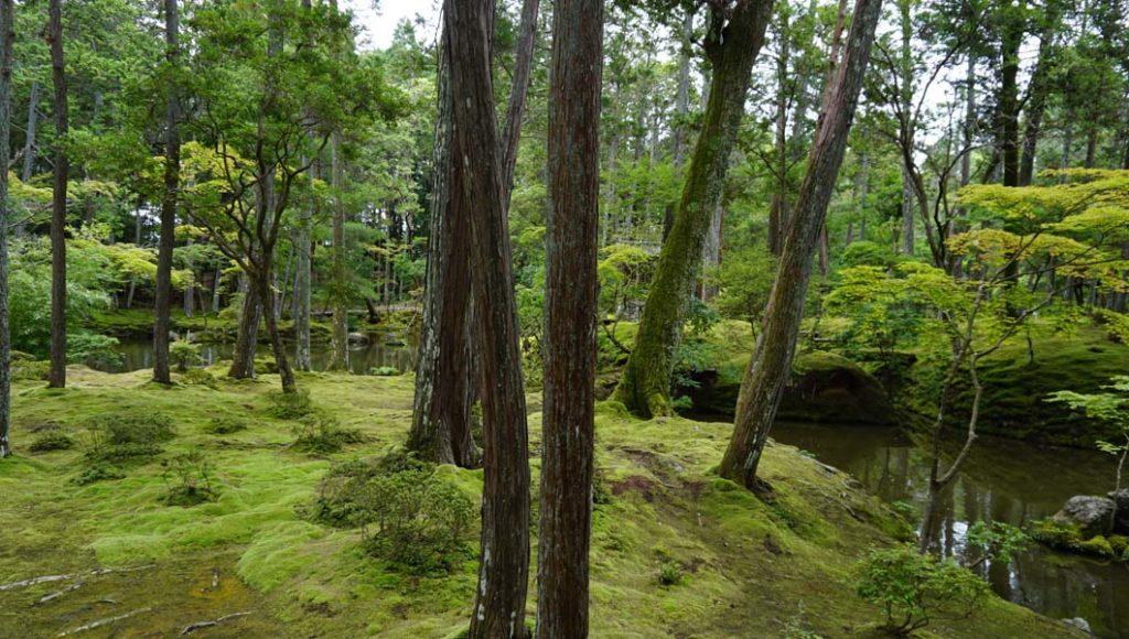 西芳寺 庭園