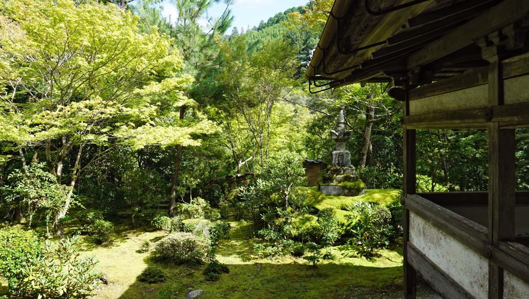 西明寺 苔庭