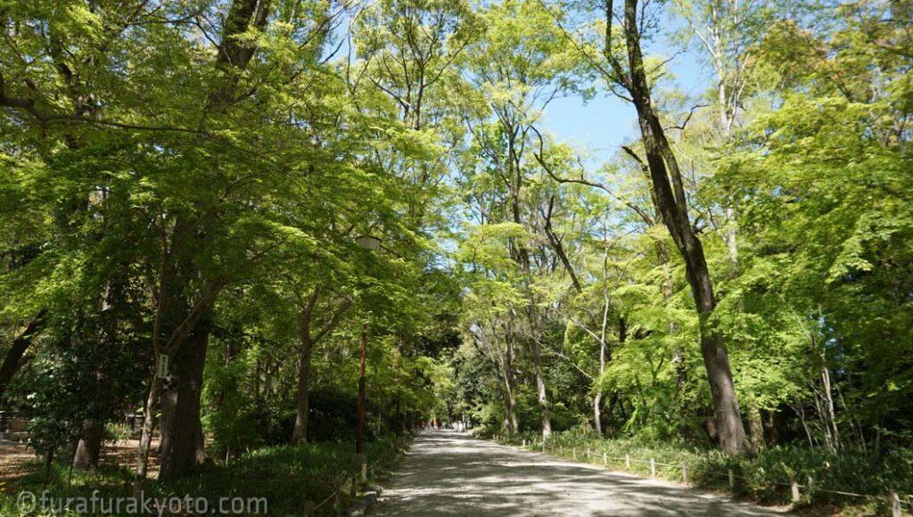糺の森の表参道